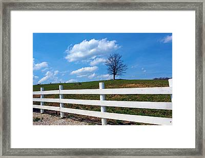 Lone Tree Framed Print by Lorna Rogers Photography