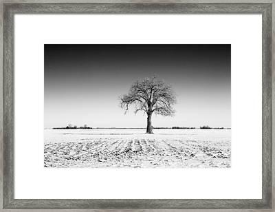 Lone Tree On Snowy Field Framed Print by Donald  Erickson