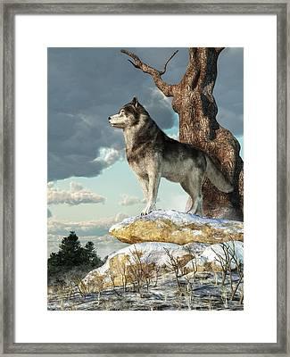 Lone Wolf Framed Print by Daniel Eskridge