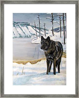 Lone Wolf Framed Print by Harriet Peck Taylor