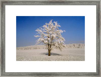 Lonely Framed Print by Aged Pixel