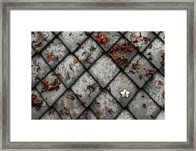 Lonely Flower Framed Print by Justin Albrecht