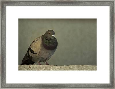 Lonely Framed Print by Mario Celzner