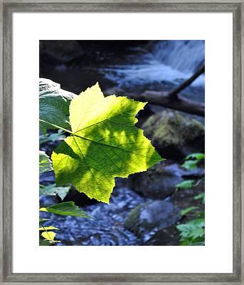 Lonely Me Framed Print by Amanda Eberly-Kudamik