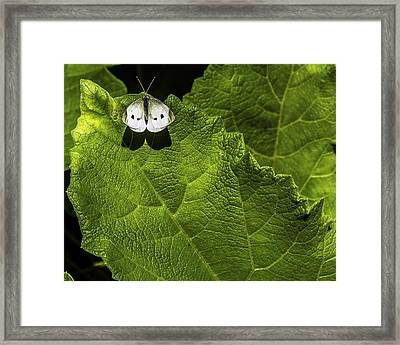 Lonely On A Leaf Framed Print by Tim Buisman