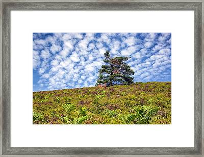 Lonely Tree Framed Print by Adrian Evans