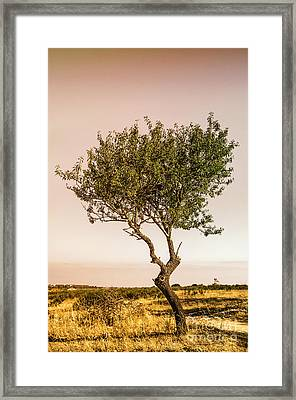 Lonely Tree Framed Print by Carlos Caetano