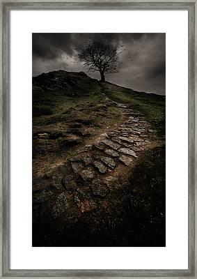 Lonely Tree Framed Print by Jaroslaw Blaminsky