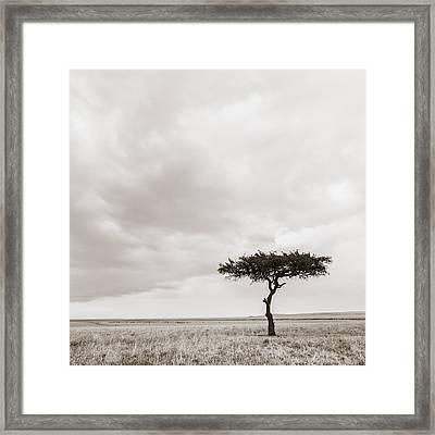 Lonely Tree Masai Mara Kenya Framed Print by Regina Mueller