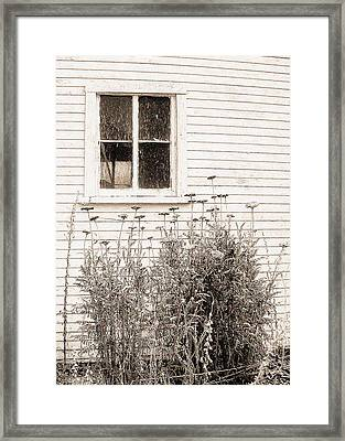 Lonely Winter Flowers Framed Print by Jon Woodhams