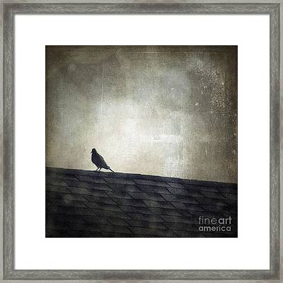 Lonesome Dove Framed Print by Trish Mistric