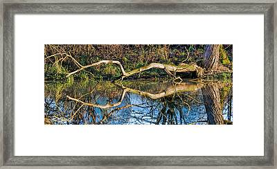 Long Arms Framed Print by Leif Sohlman
