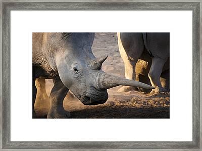 Long Horn Framed Print by Andy-Kim Moeller