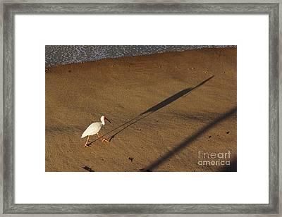 Long Tall Ibis Framed Print by Lynda Dawson-Youngclaus