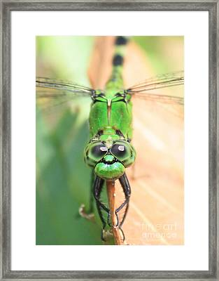 Long Time No See Framed Print by Carol Groenen