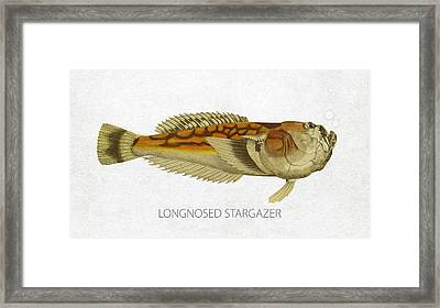 Longnosed Stargazer Framed Print by Aged Pixel