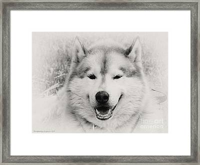 Look At That Face Framed Print by Gena Weiser
