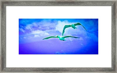Look Dear It's The Seahawks Framed Print by Ronda Broatch