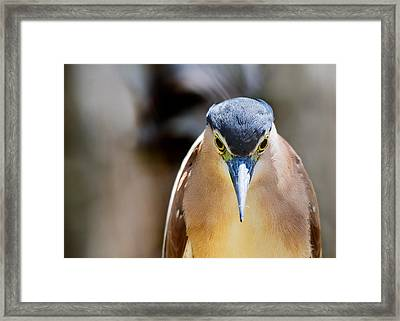 Look Into My Eyes   You Are Feeling Sleepy Framed Print by Mr Bennett Kent