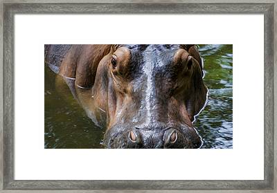 Look Me In The Eyes Framed Print by Aged Pixel