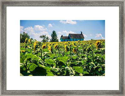 Look This Way Framed Print by Kristopher Schoenleber