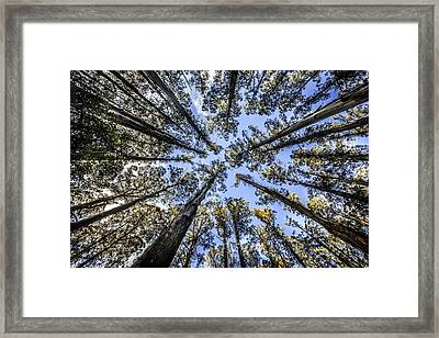 Look Up Framed Print by Shari Mattox