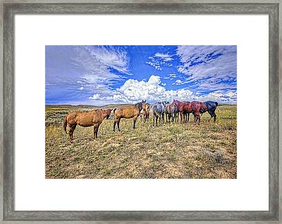 Looking Back Framed Print by James Steele