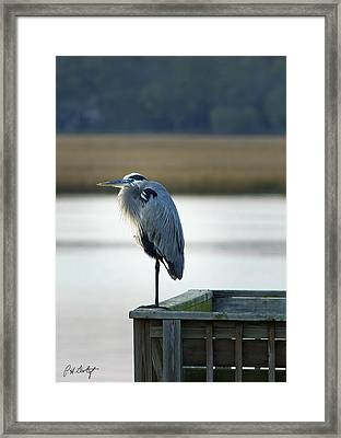 Looking For Dinner Framed Print by Phill Doherty
