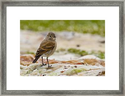 Looking For Goodies Framed Print by Tim Grams