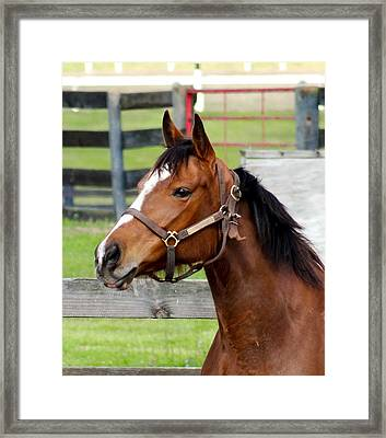 Looking For It Master Framed Print by Dennis Dugan