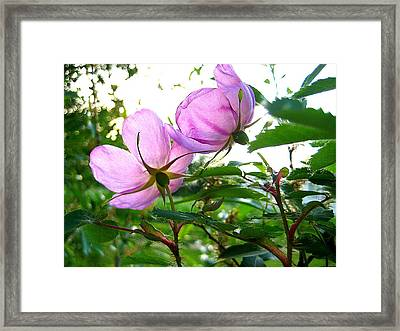 Looking Forward Framed Print by Shirley Sirois