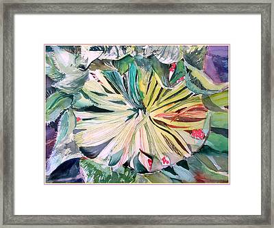 Looking In A Sunflower Framed Print by Mindy Newman