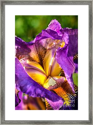 Looking Inside The Iris Framed Print by Robert Bales