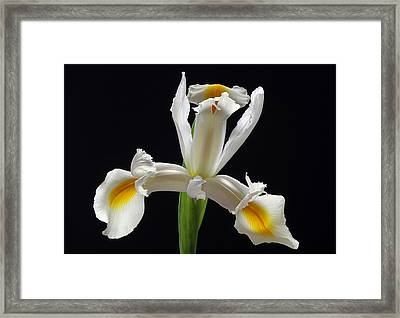 Looking Like A Million Bucks Today Framed Print by Juergen Roth