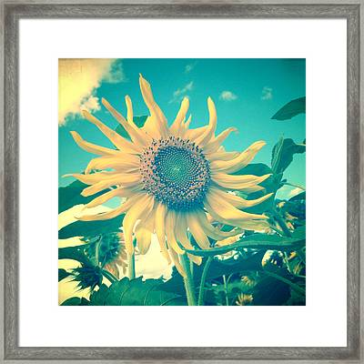Looking On The Bright Side Framed Print by Joy StClaire