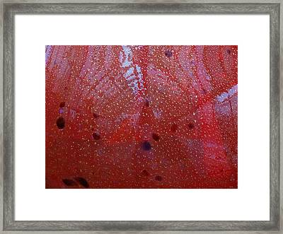 Looking Through The Glass Framed Print by Dan Sproul