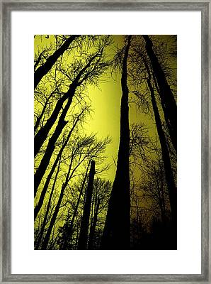 Looking Through The Naked Trees  Framed Print by Jeff Swan