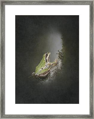 Looking Up Framed Print by Angie Vogel