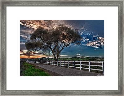 Los Alamos Vineyard Oak Framed Print by Thomas Hall Photography