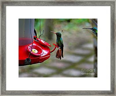 Lots Of Company Arriving Framed Print by Al Bourassa
