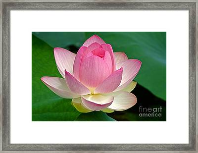 Lotus 7152010 Framed Print by Byron Varvarigos