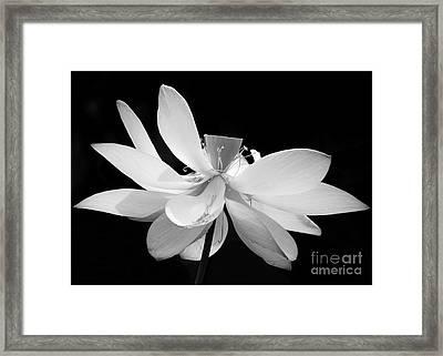 Lotus Ballerina Framed Print by Sabrina L Ryan