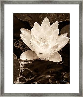 Lotus Blossom Framed Print by John Pagliuca