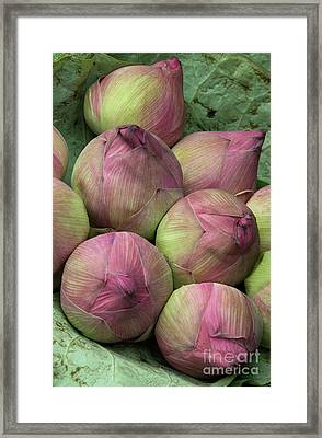 Lotus Buds Framed Print by Rick Piper Photography