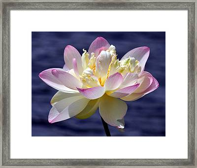 Lotus By The Lake Framed Print by Gail Butler