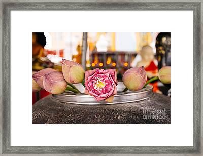 Lotus Flower Offering Framed Print by Dean Harte