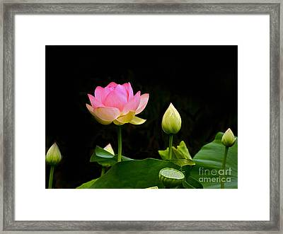 Lotus Full Lotus Bright Framed Print by Byron Varvarigos
