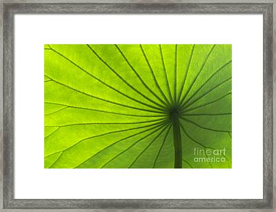 Lotus Leaf Framed Print by Tim Gainey