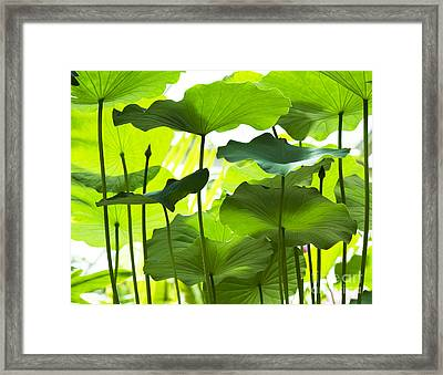 Lotus Leaves Framed Print by Tim Gainey