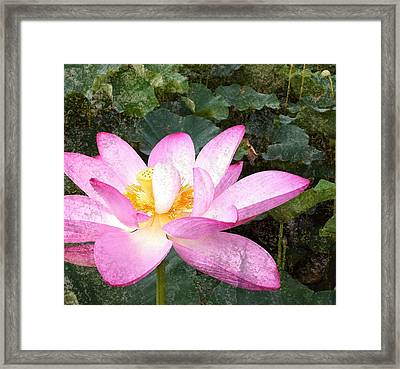 Lotus Framed Print by Michael  Volpicelli